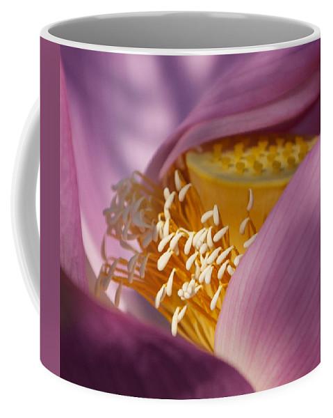 Kenilworth Park & Aquatic Gardens Coffee Mug featuring the photograph Lotus Seed Pod by Rande Cady