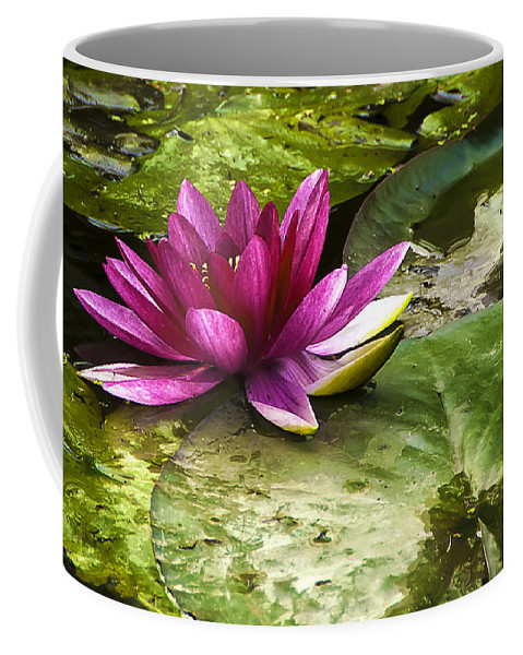 Botanic Coffee Mug featuring the photograph Lotus by Svetlana Sewell