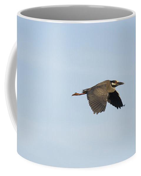 Louisiana Coffee Mug featuring the photograph Louisiana Green Heron by Robert Ponzoni