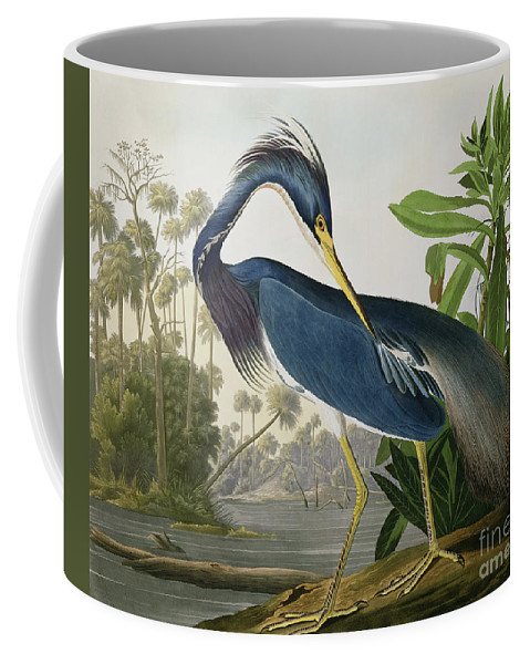 Louisiana Heron Coffee Mug featuring the painting Louisiana Heron by John James Audubon