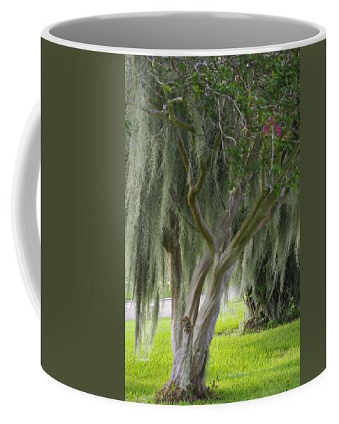 Photograph Coffee Mug featuring the photograph Louisiana Moodiness by Rhonda McDougall