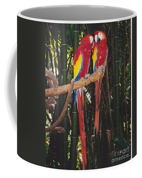 Birds Coffee Mug featuring the photograph Love Birds by Michelle Powell