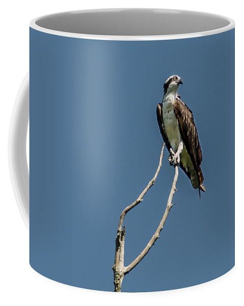 Osprey Coffee Mug featuring the photograph Love Call by Norman Johnson