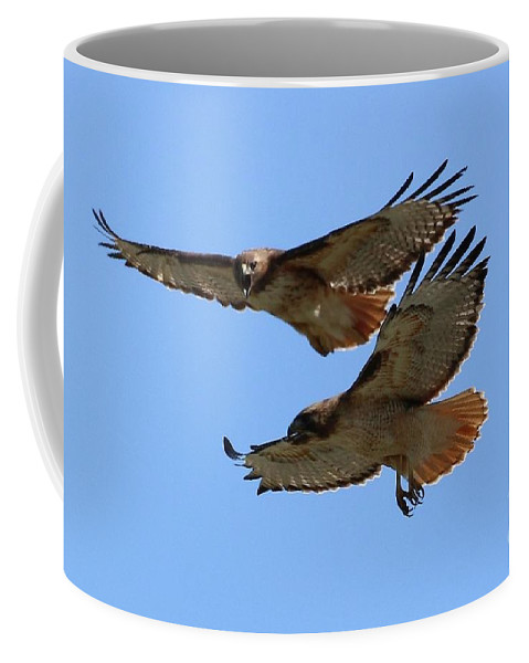 Red-tailed Hawk Coffee Mug featuring the photograph Courtship Love Is In The Air by Angela Koehler