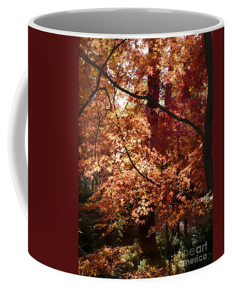 Fall Landscape Photograph Coffee Mug featuring the photograph Lovely Autumn Tree by Carol Groenen