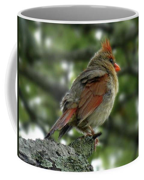 Northern Cardinal Coffee Mug featuring the photograph Lovely Female Cardinal by Lyuba Filatova