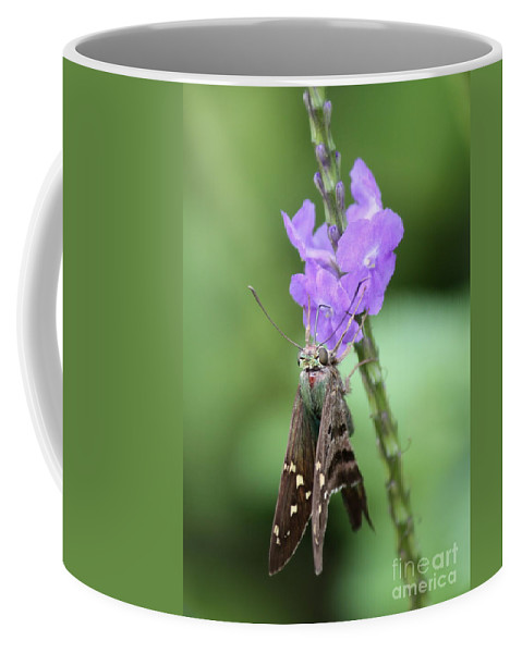 Nature Coffee Mug featuring the photograph Lovely Moth On Dainty Flower by Carol Groenen