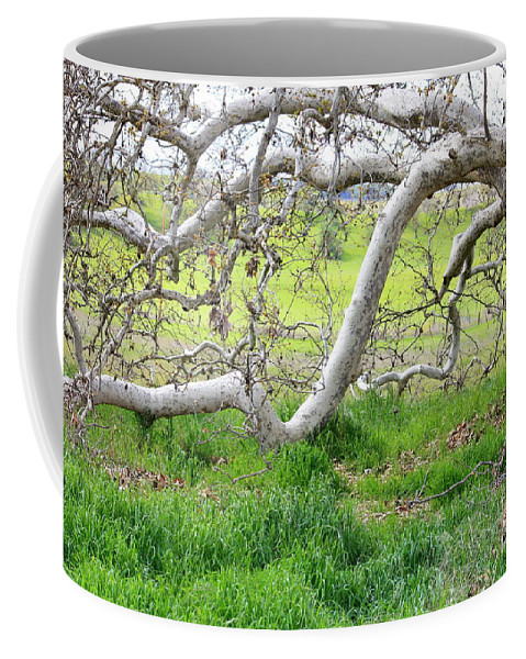 Landscape Coffee Mug featuring the photograph Low Branches On Sycamore Tree by Carol Groenen