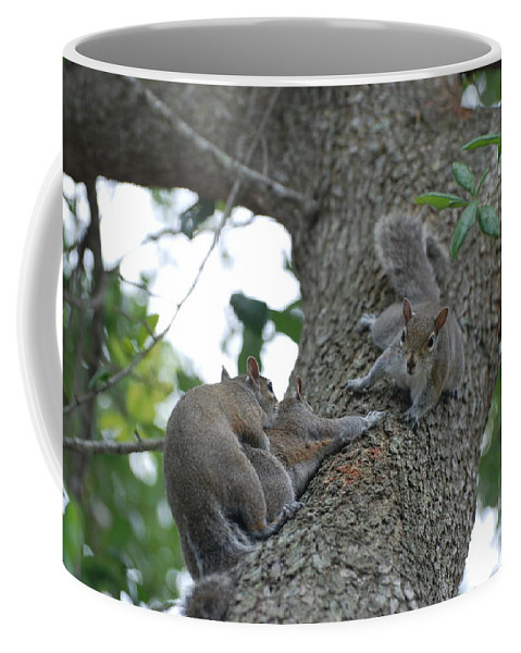 Squirrel Coffee Mug featuring the photograph Luck Be A Lady by Rob Hans