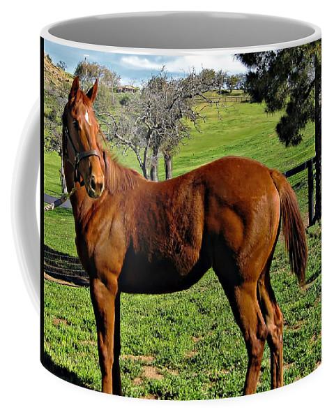 Horse Coffee Mug featuring the photograph Lucky Student by Steve Harrington