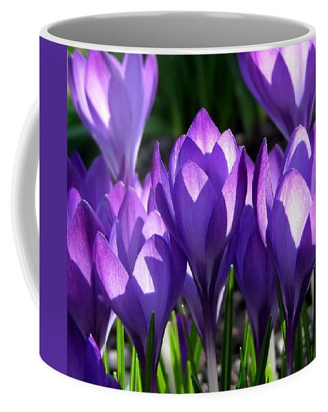 Crocus Coffee Mug featuring the photograph Luminous Floral Geometry by Byron Varvarigos