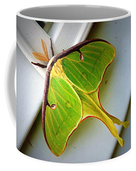 luna Moth Luna Coffee Mug featuring the photograph Luna Moth by Cricket Hackmann