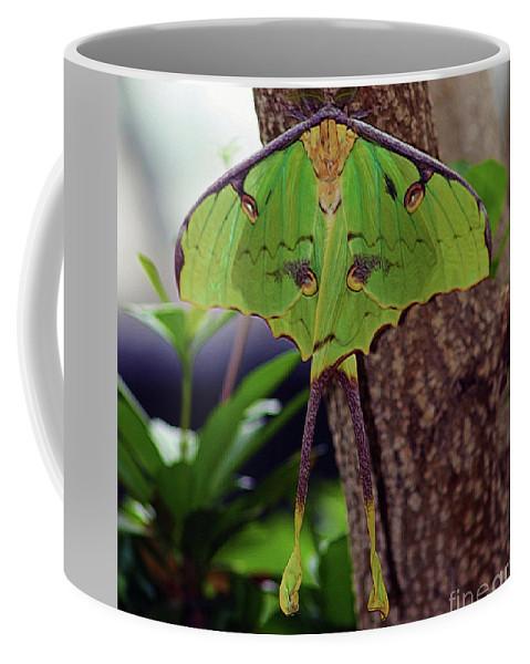 Luna Moth Coffee Mug featuring the photograph Luna Moth by Patti Whitten