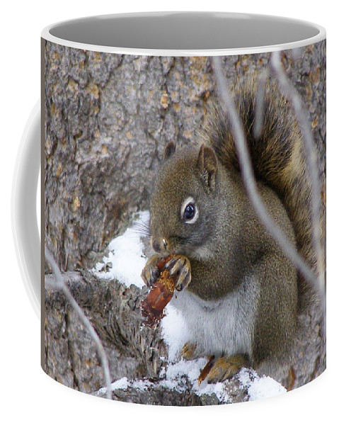 Squirrel Coffee Mug featuring the photograph Lunch On The Patio by DeeLon Merritt