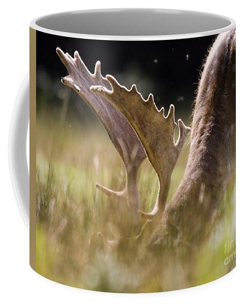 Fallow Deer Coffee Mug featuring the photograph Lunch Time by Angel Ciesniarska
