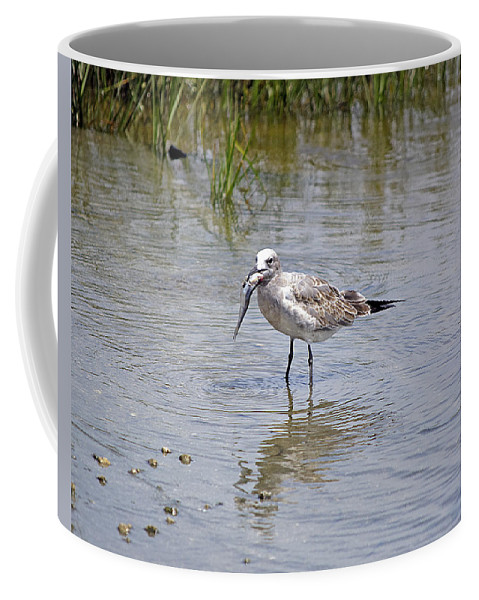 Seagull Coffee Mug featuring the photograph Lunch Time by Kenneth Albin