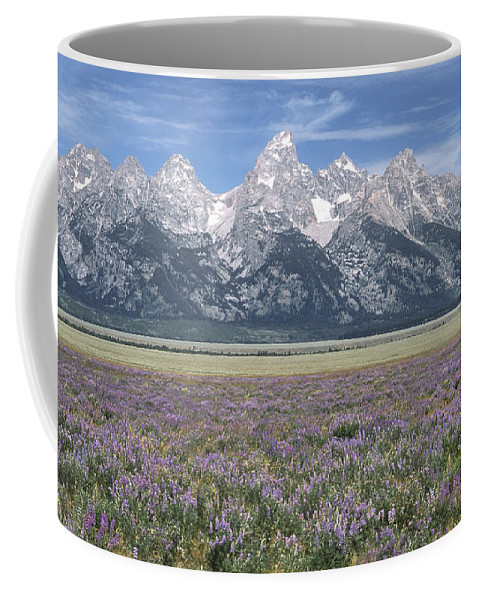 Grand Teton Coffee Mug featuring the photograph Lupine And Grand Tetons by Sandra Bronstein