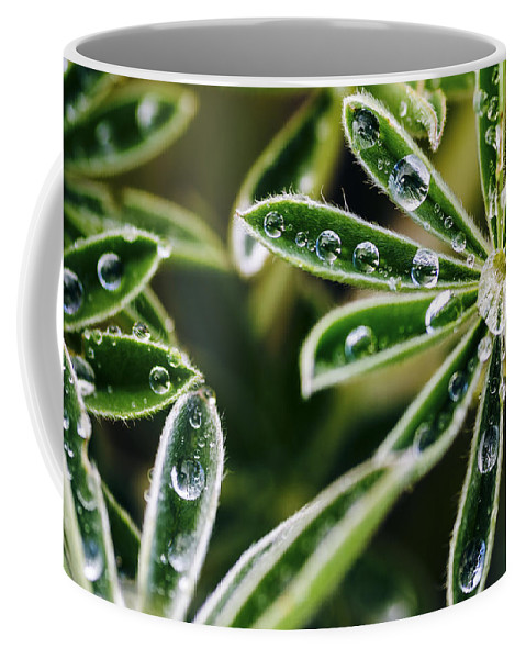Lupine Plant Coffee Mug featuring the photograph Lupine Leaves Decorated With Dew Drops by Vishwanath Bhat