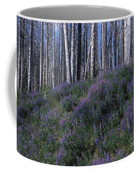 Yellowstone National Park Coffee Mug featuring the photograph Lupine On Mt. Washburn - Yellowstone by Sandra Bronstein