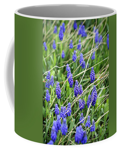 Flower Coffee Mug featuring the photograph Lush Grape Hyacinth by Marilyn Hunt