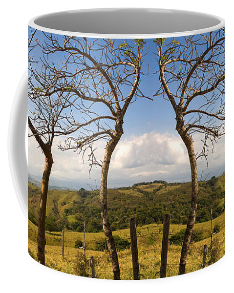 Trees Coffee Mug featuring the photograph Lush Land Leafless Trees IIi by Madeline Ellis