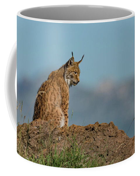 Cabarceno Coffee Mug featuring the photograph Lynx In Profile On Rock Looking Down by Ndp