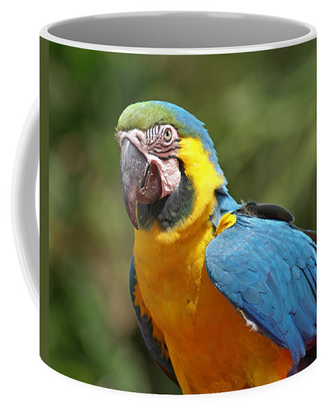 Parrot Coffee Mug featuring the photograph Macaw by Heather Coen