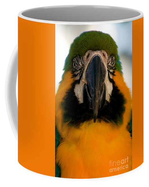 Macaw Coffee Mug featuring the photograph Macaw IIi by Thomas Marchessault