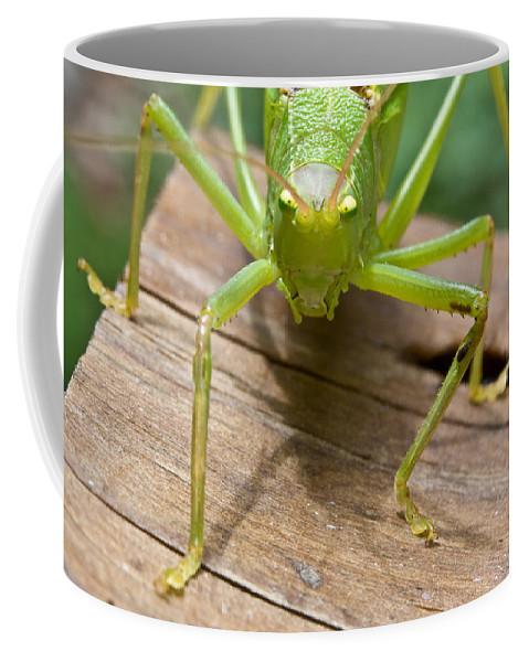 Longhorned Coffee Mug featuring the photograph Mad by Douglas Barnett