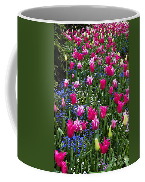 Flower Coffee Mug featuring the photograph Magenta And White Tulips by Louise Heusinkveld