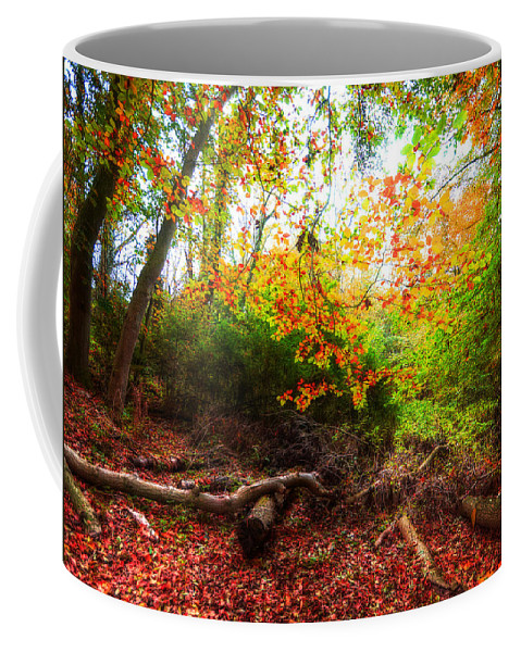 Autumn Coffee Mug featuring the photograph Magic Forest by Svetlana Sewell