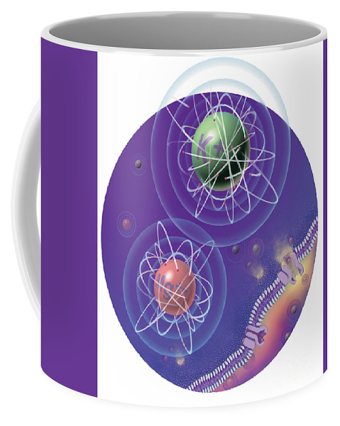 Conceptual Coffee Mug featuring the photograph Magnesium And Potassium Ions by DNA Illustrations