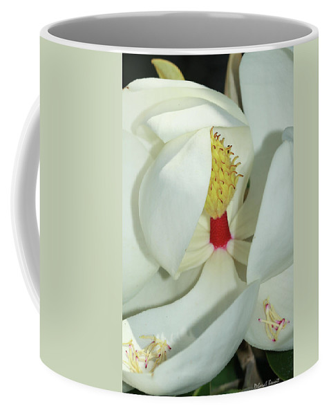 Magnolia Coffee Mug featuring the photograph Magnolia Grace And Beauty by Deborah Benoit