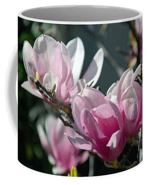 Flowers Coffee Mug featuring the photograph Magnolias Are Blooming by Susanne Van Hulst