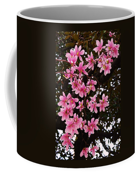 Floral Art Tree Baltimore Spring Vision Magnolia Blossoms Seasonal Art Nature Mount Vernon Outdoors Minimal Vertical Vision Metal Frame Suggested Poster Print Canvas Print Available On Tote Bags T Shirts Duvet Covers Shower Curtains Throw Pillows Mugs And Phone Cases Coffee Mug featuring the photograph Magnolias In Spring by Poet's Eye