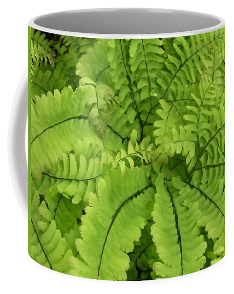 Fern Coffee Mug featuring the photograph Maidenhair by Nelson Strong