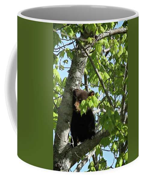Maine Wildlife Coffee Mug featuring the photograph Maine Black Bear Cub In Tree by Sharon Fiedler