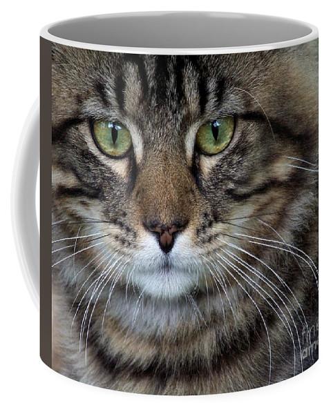 Cat Coffee Mug featuring the photograph Maine Coon Cat Portrait by Jai Johnson