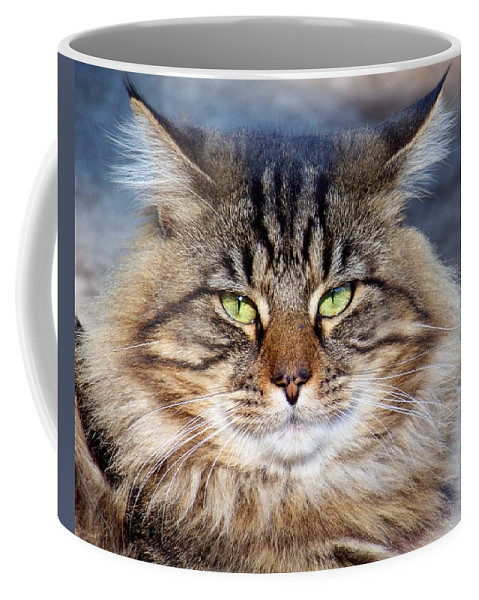 Cat Coffee Mug featuring the photograph Maine Coon I by Jai Johnson