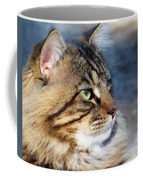 Cat Coffee Mug featuring the photograph Maine Coon II by Jai Johnson