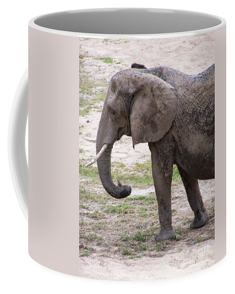 Elephant Coffee Mug featuring the photograph Majestic Elephant by Stephanie Hanson