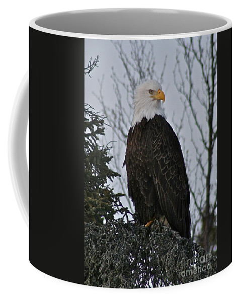 Eagle Coffee Mug featuring the photograph Majestic by Rick Monyahan