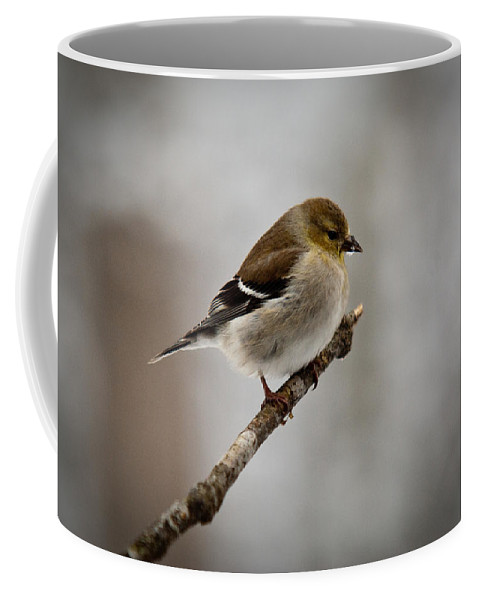 Male Coffee Mug featuring the photograph Male American Golden Finch by Douglas Barnett