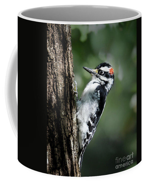 Downy Woodpecker Coffee Mug featuring the photograph Male Downy by Amy Porter