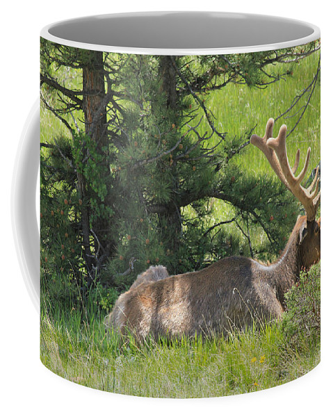 Elk Coffee Mug featuring the photograph D10271-male Elk 2 by Ed Cooper Photography