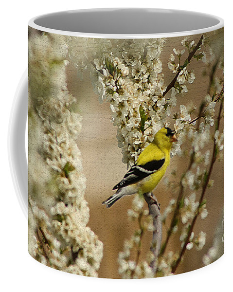 Finch Coffee Mug featuring the photograph Male Finch In Blossoms by Cathy Beharriell