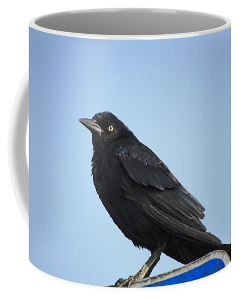 Grackle Coffee Mug featuring the photograph Male Grackle by Kenneth Albin