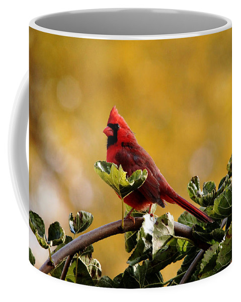 Cardinals Coffee Mug featuring the photograph Male Northern Red Cardinal by Debbie Oppermann