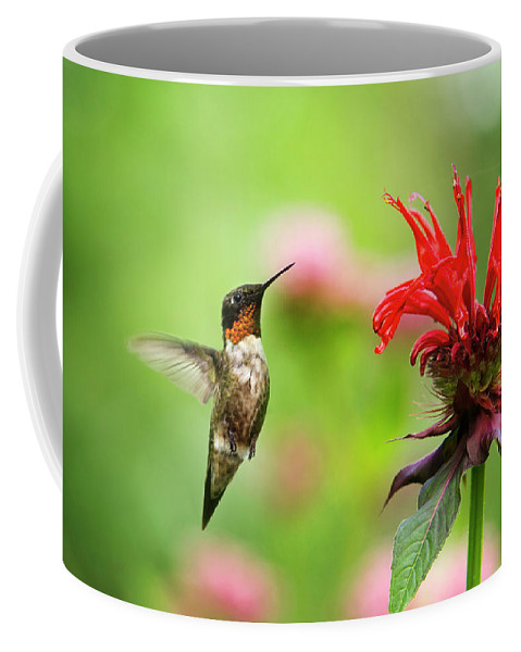 Hummingbird Coffee Mug featuring the photograph Male Ruby-throated Hummingbird Hovering Near Flowers by Christina Rollo