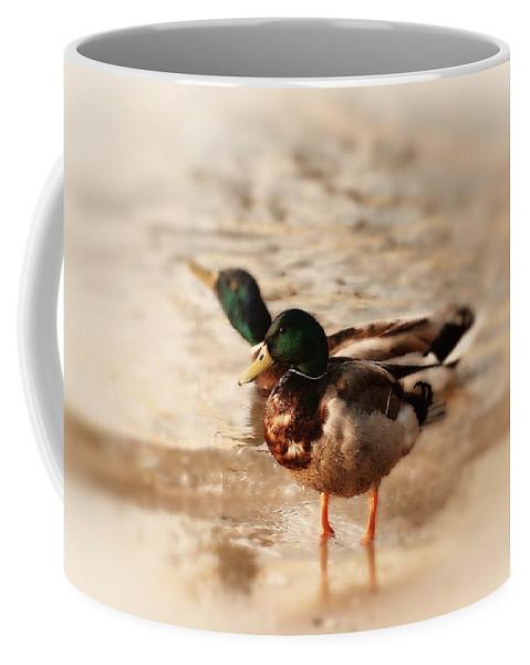 Mallard Ducks Coffee Mug featuring the photograph Mallard Ducks by Angie Tirado